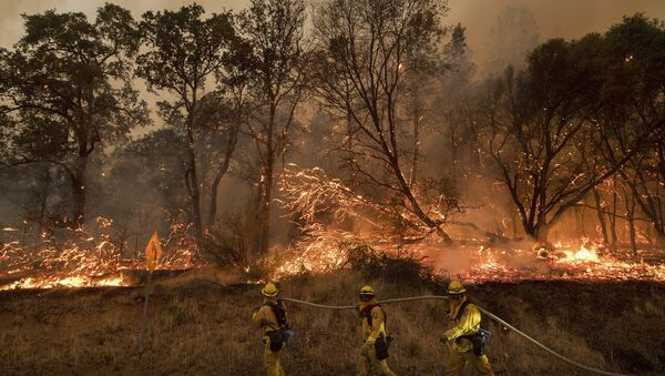Firefighters battle a wildfire as it threatens to jump a street near Oroville, Calif., on Saturday, July 8, 2017. Evening winds drove the fire through several neighborhoods leveling homes in its path. - Sputnik International
