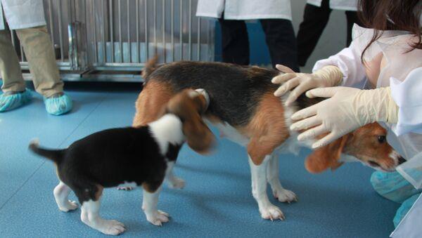 Cloned dogs - Sputnik International