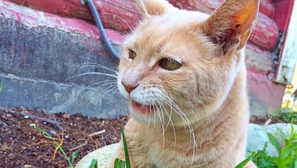 Alaska Town Says Goodbye to Honorary Cat Mayor - Sputnik International
