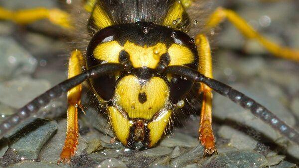Wasp - Sputnik International