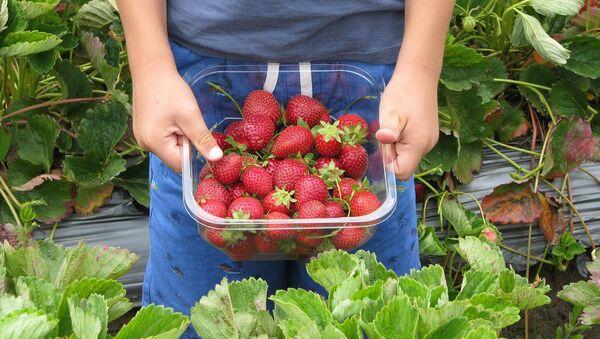 Strawberries - Sputnik International