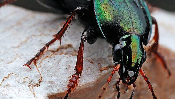 Beetle - Sputnik International