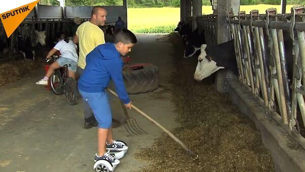 Cow Caretaker On Hoverboard - Sputnik International