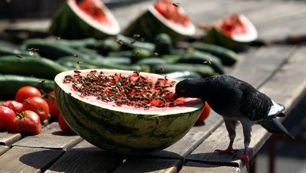 A bird eats a watermelon in downtown Zagreb, Croatia August 4, 2017 - Sputnik International