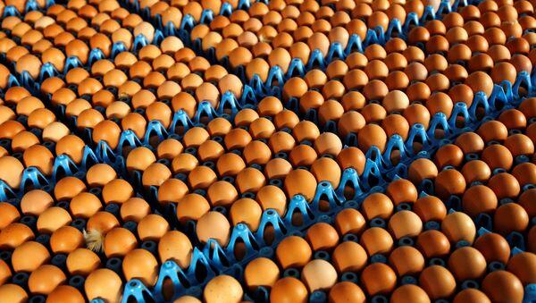 Eggs - Sputnik International