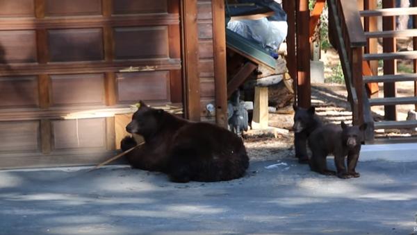 You're Flat! High-Brow Bears Flee from Violin - Sputnik International
