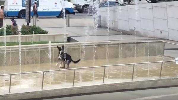 Hyper Hound Hops Around Water Fountain - Sputnik International