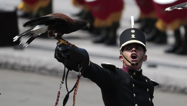 An eagle perches on a leather glove, as the handler looks up toward the president while filing past during the annual Independence Day military parade in Mexico City's main square, known as the Zocalo, Saturday, Sept. 16, 2017. Mexico is marking the 207th anniversary of its independence from Spain - Sputnik International