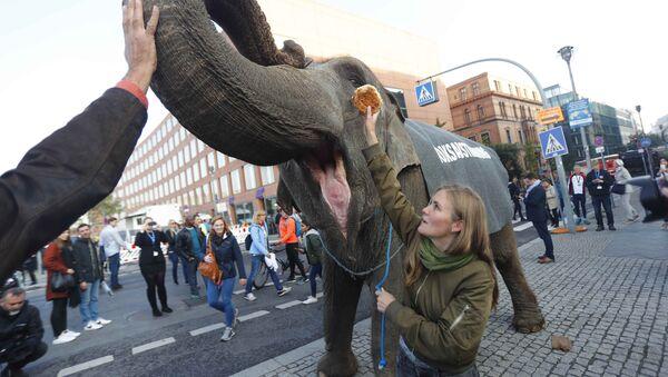 Activists protest with an elephant for plebiscites in Berlin, Germany, September 24, 2017 - Sputnik International