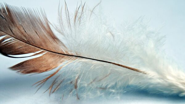 Feather - Sputnik International