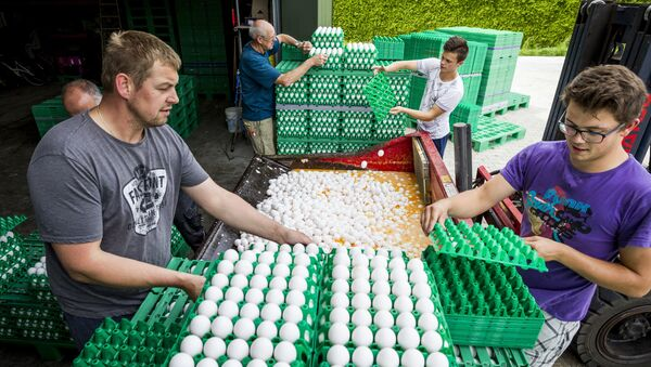 Farmers throw eggs at a poultry farm in Onstwedde, Netherlands, on August 3, 2017 after the Dutch Food and Welfare Authority (NVWA) highlighted the contamination of eggs by fipronil, a toxic insecticide outlawed from use in the production of food - Sputnik International