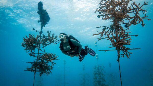 Coral Restoration Foundation - Sputnik International