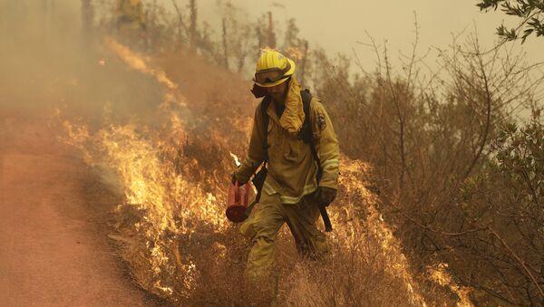 A Sonoma City firefighter walks in front of flames during a backburn operation Friday, Oct. 13, 2017, in Glen Ellen , Calif. - Sputnik International