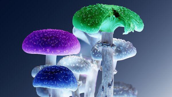 Mushrooms - Sputnik International