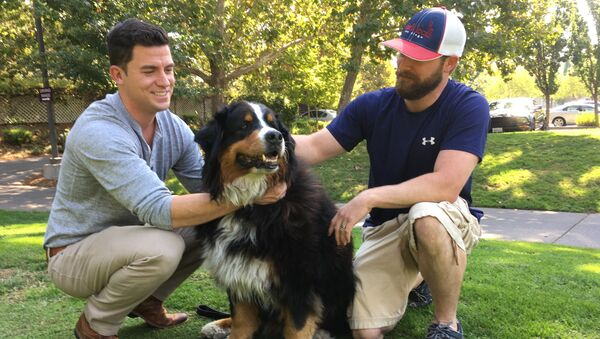 Jack Weaver, left, and his brother in law, Patrick Widen, pose with Izzy, a 9-year-old Bernese Mountain Dog, who belongs to Weaver's parents, Saturday, Oct. 14, 2017, in Windsor, Calif. - Sputnik International