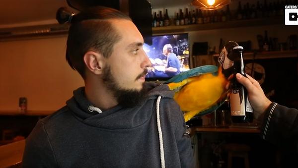 Polly Want a Porter? Parrot's Beer-Opening Beak - Sputnik International