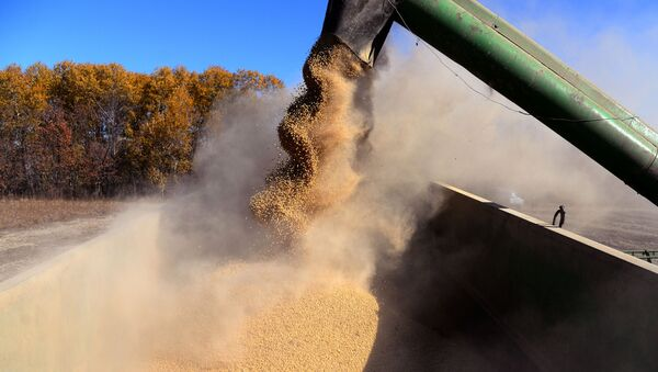 A combine unloads beans during soybeans harvesting in the Khabarovsk Territory - Sputnik International