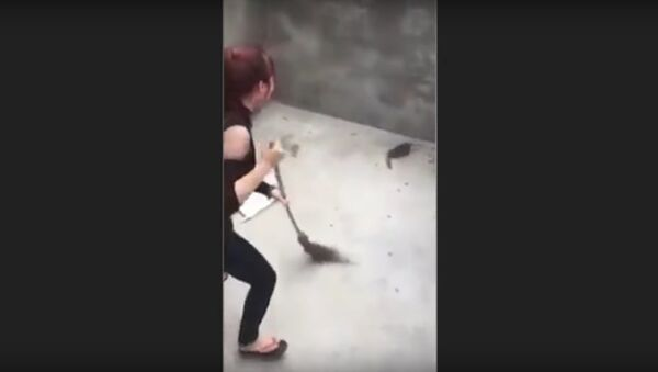 Woman attacked by a Rat that JUMPS on her as she sweeps   Rat Jumps on Woman - Sputnik International