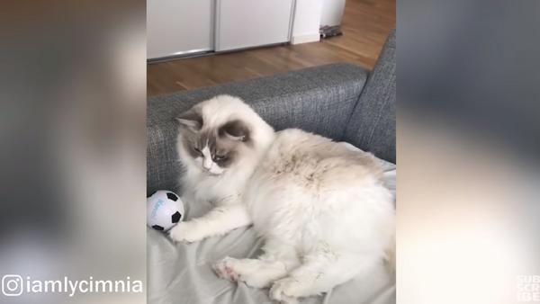 Messi Meets Lazy in Cat's Football Practice - Sputnik International