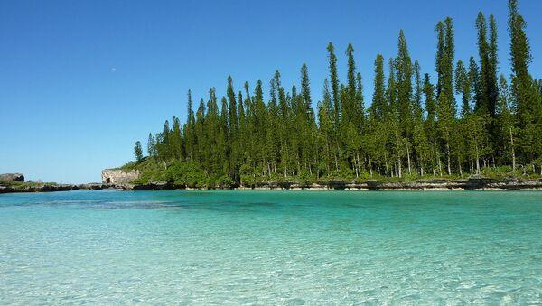 Araucaria columnaris New Caledonia - Sputnik International