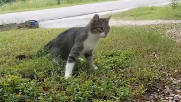 Cat With a Rare Disease - Sputnik International
