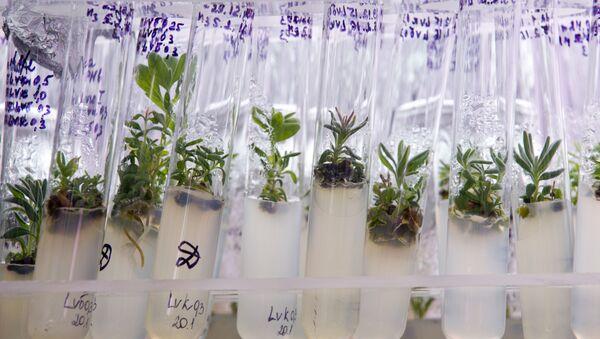 Plant samples at the laboratory - Sputnik International