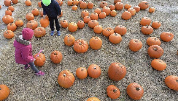 Children walk between pumpkins - Sputnik International