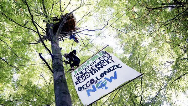 an activist climbs up a tree at the Hambach forest near Morschenich, Germany. Cologne's administrative court ruled Friday, Nov. 24, 2017 against a legal complaint brought by the environmental group BUND that wanted to halt the clearance of much of Hambach forest - Sputnik International