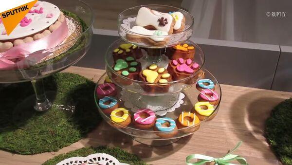 Doggy treats? This Bakery Offers Doggy Cakes! - Sputnik International