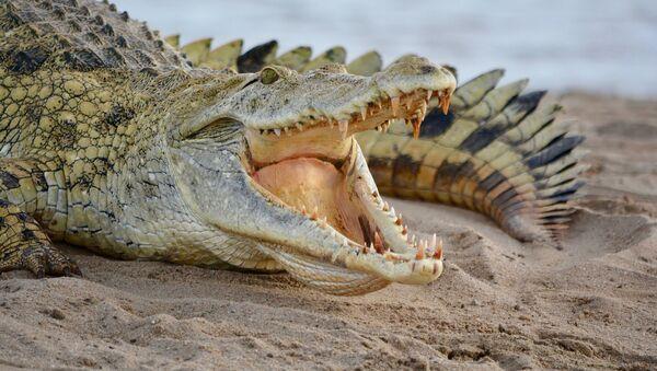 Crocodile - Sputnik International