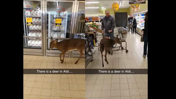 Oh Deer! Doe Denied Deals at Supermarket - Sputnik International