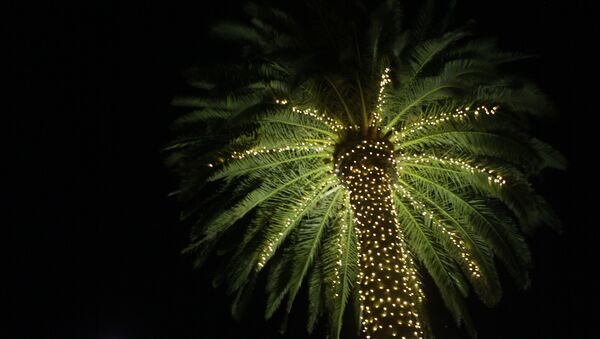 In this photo taken Wednesday Nov. 30, 2011, a palm tree is illuminated with lights at the entrance to St. Supery Vineyards and Winery in Rutherford, Calif. - Sputnik International