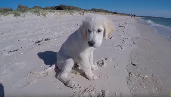 Beach Blunder: Pup's Creation Crushed by the Ocean - Sputnik International