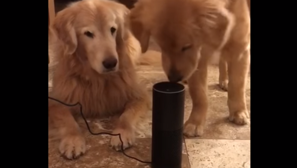 Pooches Perplexed by Canine Christmas Remix - Sputnik International