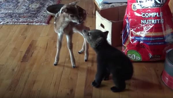 Friend or Foe? Cautious Cub Warms Up to Doe - Sputnik International