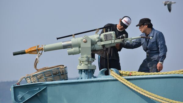 Crew of a whaling ship check a whaling gun or harpoon before departure at Ayukawa port in Ishinomaki City (File) - Sputnik International