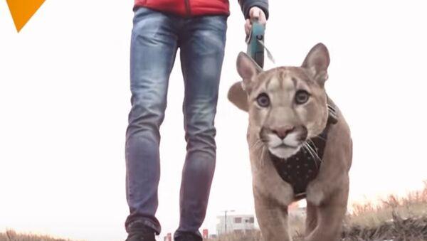 Couple Adopt Puma Named Messi - Sputnik International