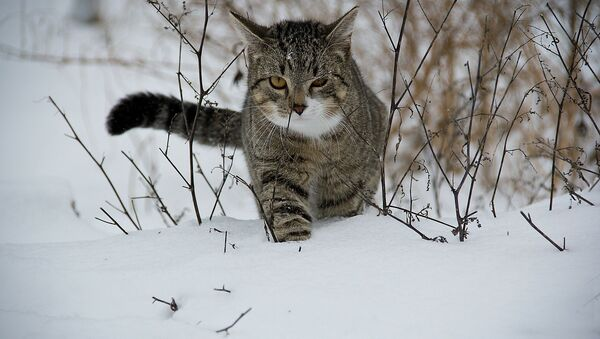 Frozen cat - Sputnik International