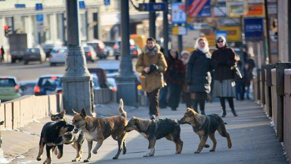 Stray dogs in Moscow. (File) - Sputnik International