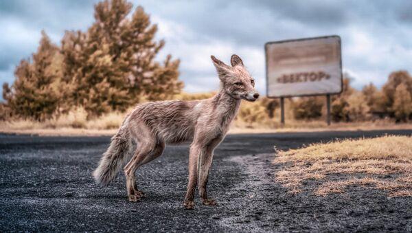 Greetings, Stalker: Chernobyl Exclusion Zone Portrayed in a New Light - Sputnik International