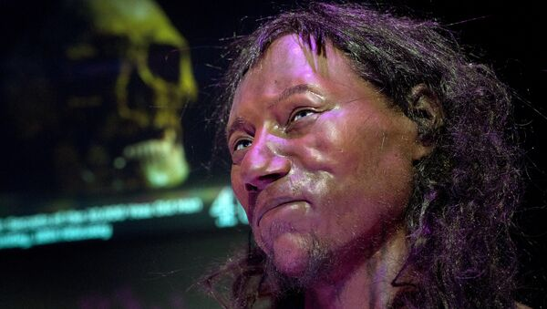 A full face reconstruction model made from the skull of a 10,000 year old man, known as 'Cheddar Man', Britain's oldest complete skeleton is pictured during a press preview at the National History Museum in London on February 6, 2018. - Sputnik International