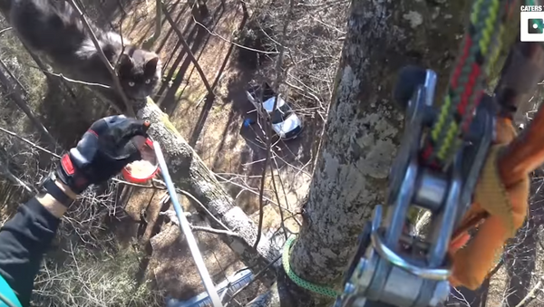 Skilled Rescuer Saves Starving, Dehydrated Kitten From 70-Foot Tree - Sputnik International