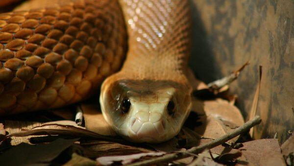 Brown Snake - Sputnik International