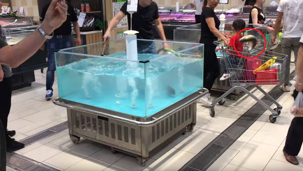Catch of the Day? Fish Springs Into Shopping Cart - Sputnik International