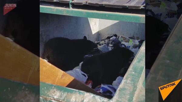 Bear Cubs Found In Dumpster - Sputnik International