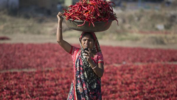 An Indian woman looks at her mobile phone as she carries red chillies on her head at a farm at Shertha village near Gandhinagar, India, Sunday, Feb. 25, 2018 - Sputnik International