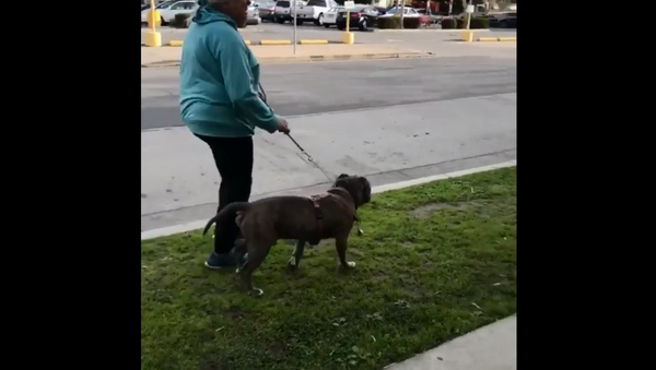 California woman goes on racist rant after man tells her to clean up after dog - Sputnik International