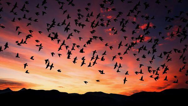 Birds - Sputnik International