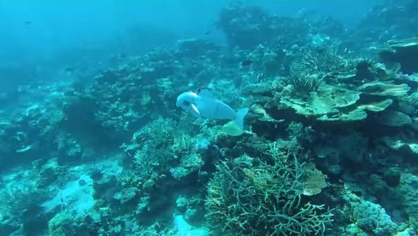 Researchers create SoFi, a robotic fish, to spy on marine life - Sputnik International