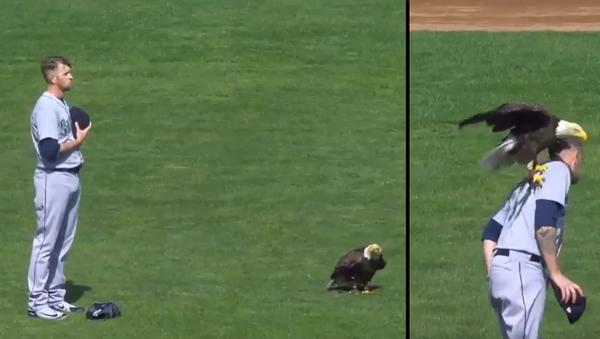 Free Bird: Bald Eagle Perches on Pitcher's Shoulder During US National Anthem - Sputnik International